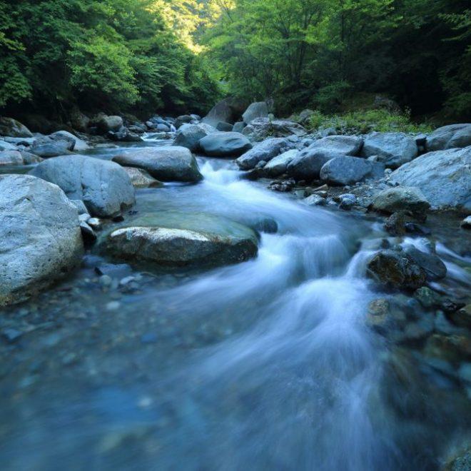 rocky stream with trees
