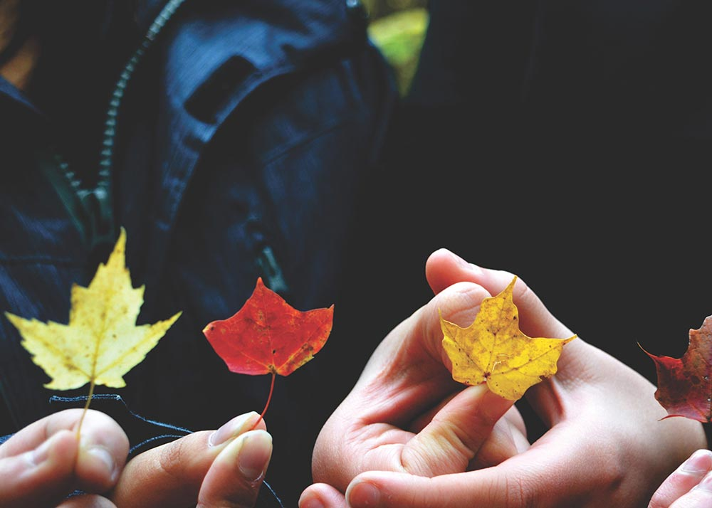 People's hands holding fall colored leaves